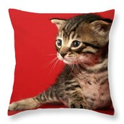 Kitten On Red Throw Pillow