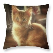 Kitten Portrait Throw Pillow