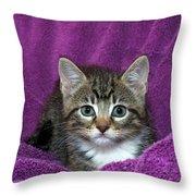 Kitten, Purr-fect In Purple Throw Pillow