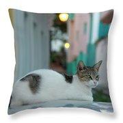 Kitten Reflections Throw Pillow