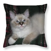 Kitten Silky Snow Lynx With Boots Throw Pillow