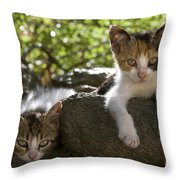 Kittens On A Wall Throw Pillow