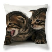 Kittens  Throw Pillow