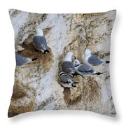 Kittiwakes Tend Their Chicks At Rspb Bempton Cliffs Throw Pillow