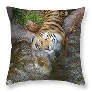Kitty Got Wet Throw Pillow