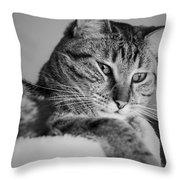 Kitty Lounge Throw Pillow