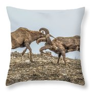 Knocked Silly Throw Pillow