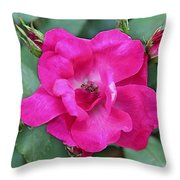 Knockout Rose Surrounded By Buds Throw Pillow
