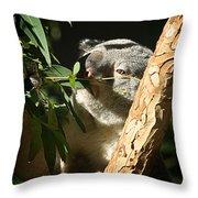 Koala Bear 3 Throw Pillow