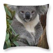 Koala Phascolarctos Cinereus Throw Pillow by Zssd