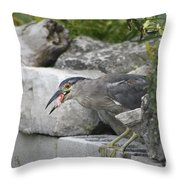 Koi For Dinner  Throw Pillow