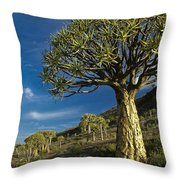 Kokerboom Throw Pillow