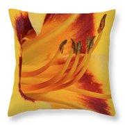 Kokomo Sunset 05 - Daylily Throw Pillow
