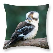 Kookaburra Australian Bird Throw Pillow