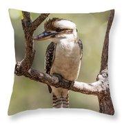 Kookaburra Sits In The Ol Gum Tree Throw Pillow