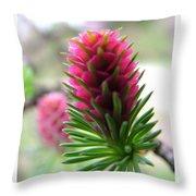 Korean Pine  Throw Pillow