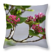 Korean Spice Viburnum Throw Pillow
