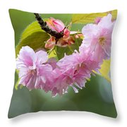 Kwanzan Cherry Bossom Flowers Macro Throw Pillow