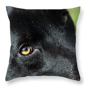 Lab Mix Throw Pillow