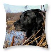 Labrador Retriever Waiting In Blind Throw Pillow