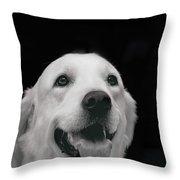 Labrador Smiling B W Throw Pillow