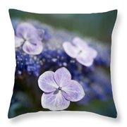 Lacecap Hydrangea Macrophylla Serrata Throw Pillow