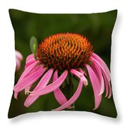 Lacewing On Echinacea Blossom Throw Pillow