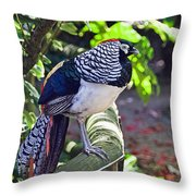 Lady Amherst's Pheasant Throw Pillow