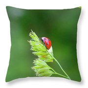 Lady Bird On A Herb Straw Close Up Throw Pillow