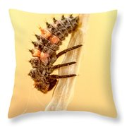 Lady Bug Larva Throw Pillow