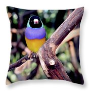 Lady Gouldian Finch Throw Pillow