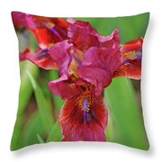 Lady In Red Iris Throw Pillow