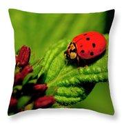 Ladybug Atop A Leaf Throw Pillow