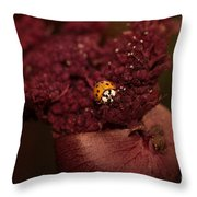 Ladybug In Chocolate Throw Pillow