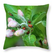 Ladybugs On Apple Blossoms Throw Pillow