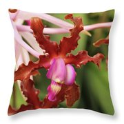 Laelia Undulata Orchid Throw Pillow