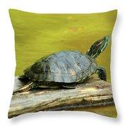 Laidback Turtle Throw Pillow