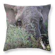 Lake Manyara Elephant Throw Pillow