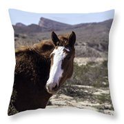 Lake Mead Mustang Throw Pillow