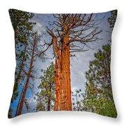Lake Tahoe Trees On 89  Throw Pillow