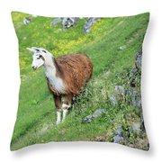 Lama In Geiranger Throw Pillow