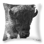 Lamar Valley Bison Black And White Throw Pillow