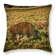 Lamar Valley Buffalo Throw Pillow