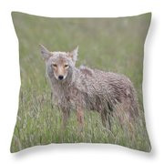 Lamar Valley Coyote Throw Pillow
