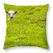 Lamb In A Dip Throw Pillow