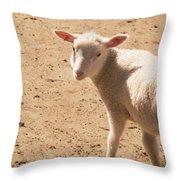 Lamb Looking Cute. Throw Pillow