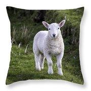 Lamb On The Isle Of Skye Throw Pillow