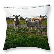 Lambs Behind The Wire Throw Pillow