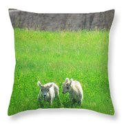 Lambs In A Sea Of Green Throw Pillow