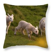 Lambs On The Meadow Throw Pillow